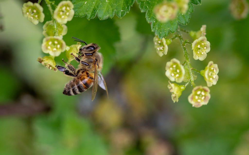 Néonicotinoïdes une décision dangereuse pour la biodiversité